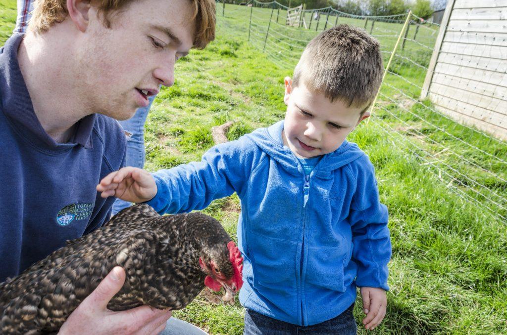 Occombe Farm chicken ranger